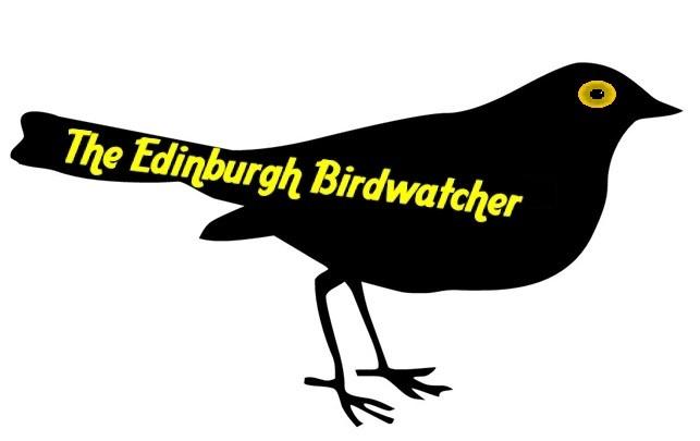The Edinburgh Birdwatcher